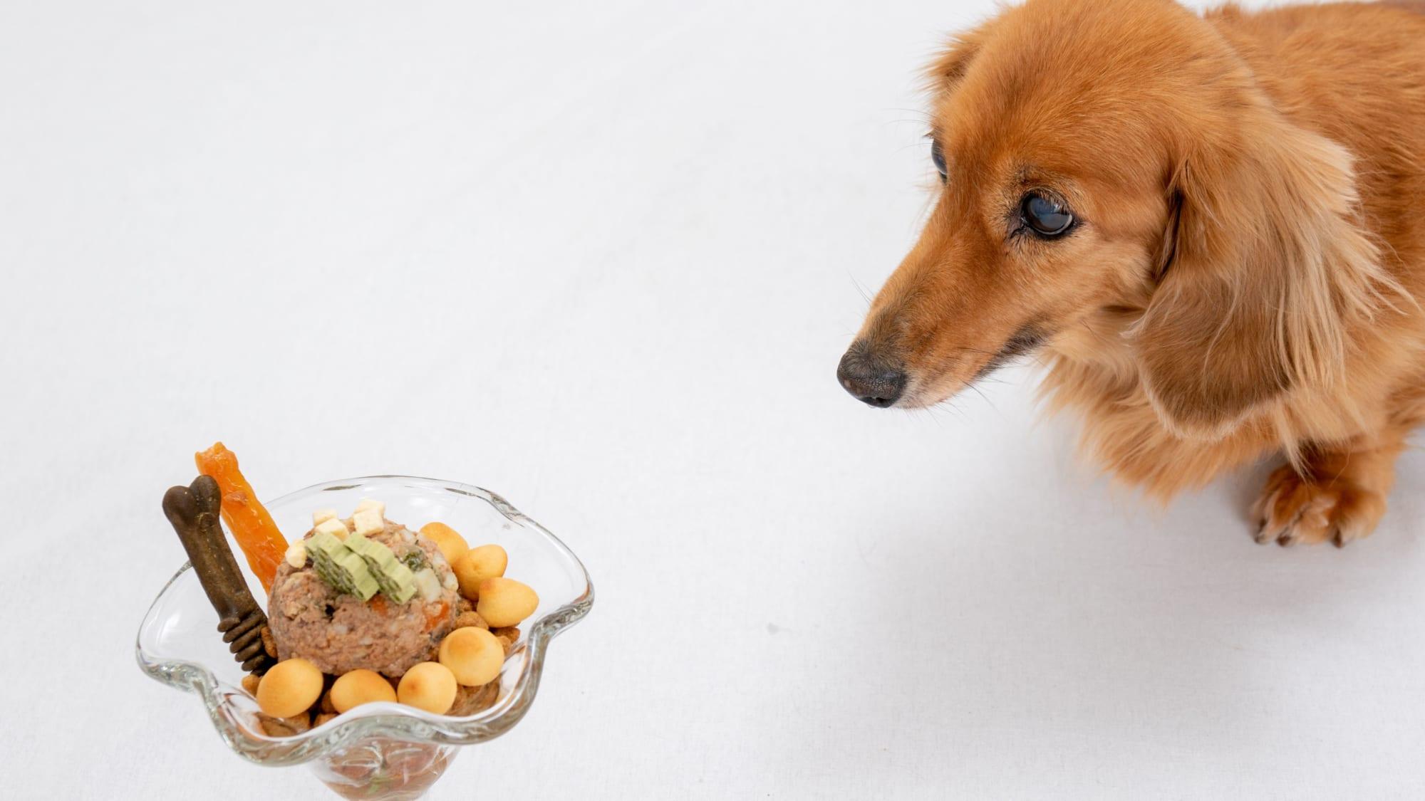 大切なペットの健康維持のための食事